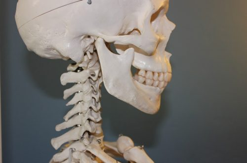 squelette crane et vertèbres